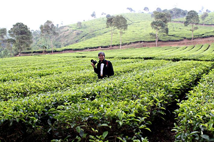 Menikmati indahnya perkebunan teh